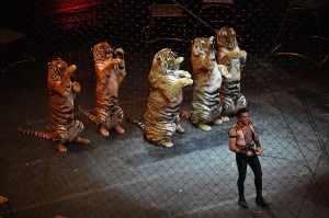 Ringling_brothers_over_the_top_tiger